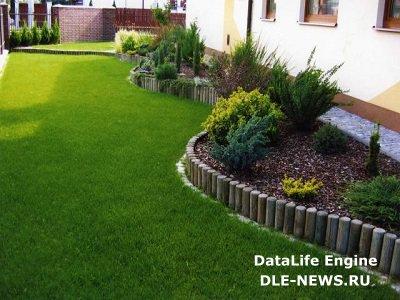 Альтернатива газону на загородном участке
