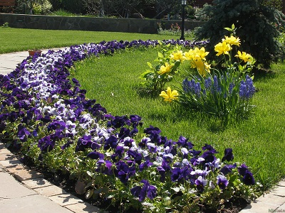 Цветочное искусство в саду: высаживаем рабатку по правилам