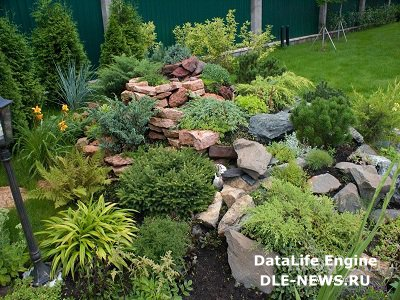 Хвойный сад на дачном участке