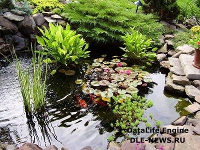 Искусственный водоём и его растения