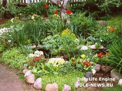 Разновидности садовых клумб