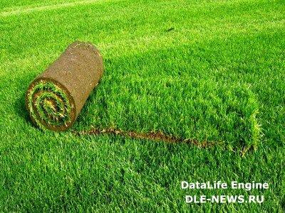 Рулонный газон для загородного участка
