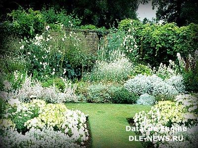 Серебристый сад