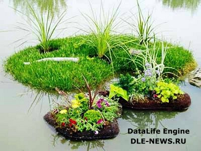 Украсим пруд цветочной клумбой